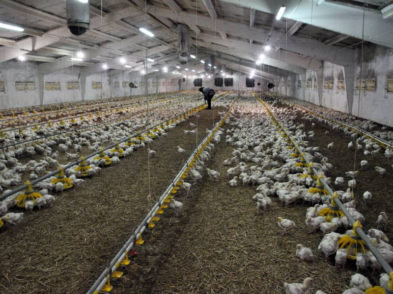 Granja avícola, bienestar y salud animal, Apliter Termografia
